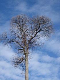 Baumkrone im Wolkenmeer von Andrea Köhler