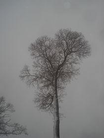 Edelkastanien-Baum-Krone im Winter im Nebelgrau von Andrea Köhler