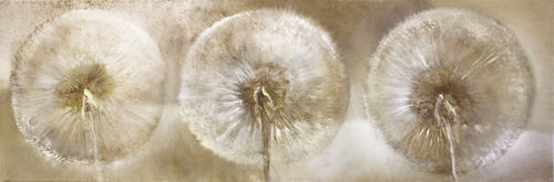 0914-drei-pusteblumen