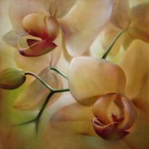 Orchideen by Annette Schmucker
