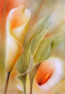Callas by Annette Schmucker