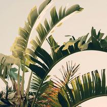 Tropic Sky von ALICIA BOCK