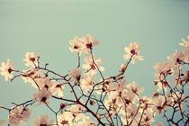 Spring Skies by ALICIA BOCK