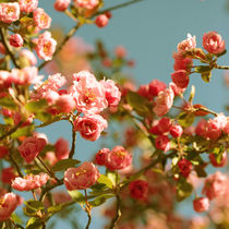 Spring Things by ALICIA BOCK