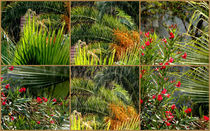 Tropical Plants - Collage by bebra