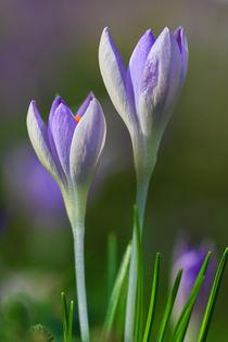 Der Frühling naht von Bernhard Kaiser