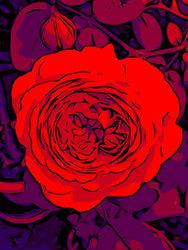 Blumenbilder-red-blue-100x75-11