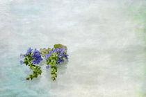 Salbei by Petra Dreiling-Schewe
