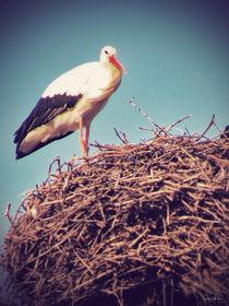 Storch auf seinem Horst by Sandra  Vollmann