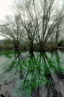 Reflections of trees by salogwynfineart