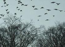 Seelenflug in den Himmel von Martina Lender-Frase