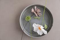 Cosmos Blumen aus Papier von Elisabeth Cölfen