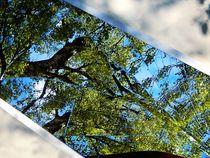 Mirror. von Zarahzeta ®