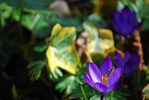 Frühlingsfreude... von loewenherz-artwork