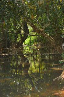 Serene Forest Stream von Nandan Nagwekar