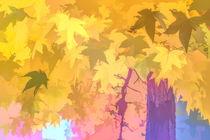 Ahornblätter von mario-s