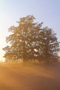 Bäume auf der Wiese by Bernhard Kaiser