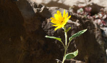 Blume 1 by Peter Frank