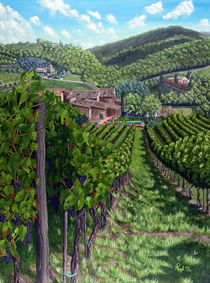 Vineyard In Tuscany by Angelo Pietrarca