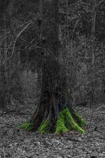 Moos im dunklen Wald von Stephan Gehrlein
