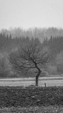 Vor dem Wald von Stephan Gehrlein
