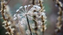 Kleine Kristalle von Stephan Gehrlein