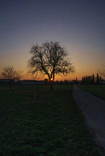 Einsam im letzten Licht by Stephan Gehrlein