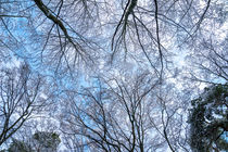 Weiß und Blau von Stephan Gehrlein