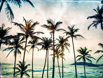 No Palm Trees by Miro May