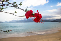 Red Hibiscus in a paradise beach by Raquel Cáceres Melo