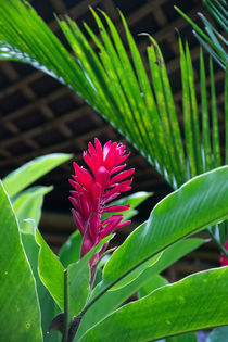 Red and tropical flower by Raquel Cáceres Melo