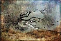 Silent Beach von Randi Grace Nilsberg
