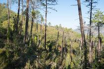 Wald von m-pictures