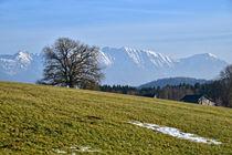 Blick auf die Alpen - Frühlin in Bayern von Peter Bergmann