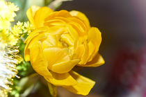 Yellow Flower by ahrt-photography