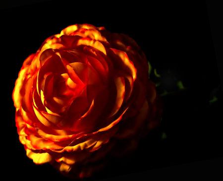 Dsc0808low-key-orangene-blume