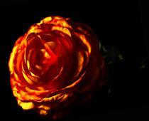 Dark Orange Flower von Anja Heising