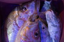 Ausbeute der jungen Fischer 1 von Hartmut Binder