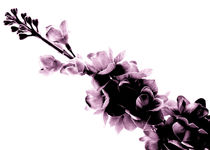 Violett Dark von ahrt-photography