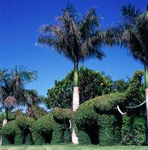 TENERIFE. Loro Parque. by li-lu