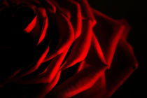 Red Rose von ahrt-photography