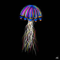 Jellyfish by Vincent J. Newman