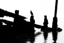 Perched Cormorant by David Hare