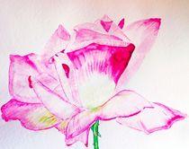 rose of love von Maria-Anna  Ziehr