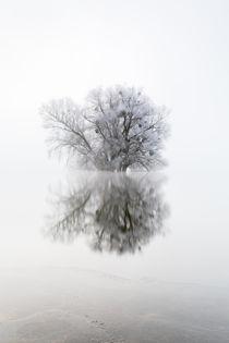 Silence by Reiko Sasse