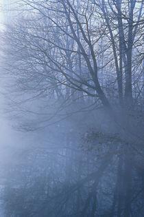 Bäume im Flussnebel by Bernhard Kaiser
