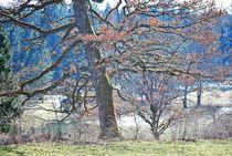 magischer Baum... 1 von loewenherz-artwork