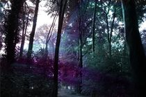 Farbenwald by Daniel Klein