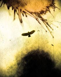 'Horusfalke' by Daniel Klein