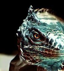 Iguana von Daniel Klein